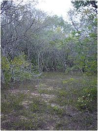 Un claro en el bosque, apto para cultivar en verano. Los Ayoreo dieron a la zona con muchos de estos claros el nombre