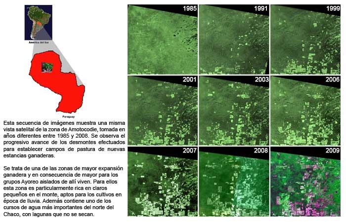 Avance de la Deforestación en la Zona de Amotocodie en los últimos 20 años