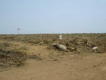 Actividades de deforestación